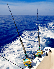 Deep Sea Fishing Lunch Tour In Gulf Of Mexico