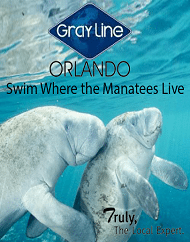 Snorkel Swim With Manatees At Crystal River