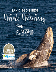 Flagship San Diego Whale Watching Tour Package