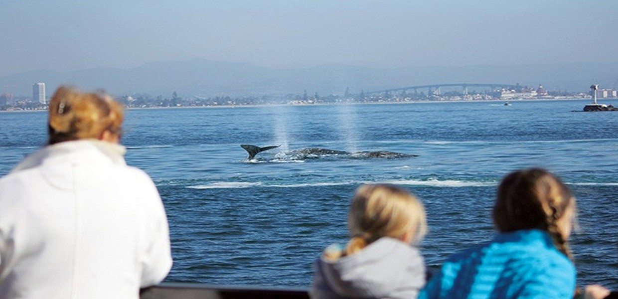 The Tour Exchange Flagship San Diego Whale Watching Tour Packages
